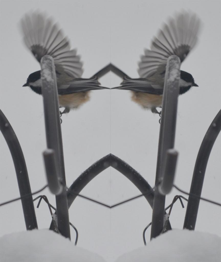 snowbirdmirror